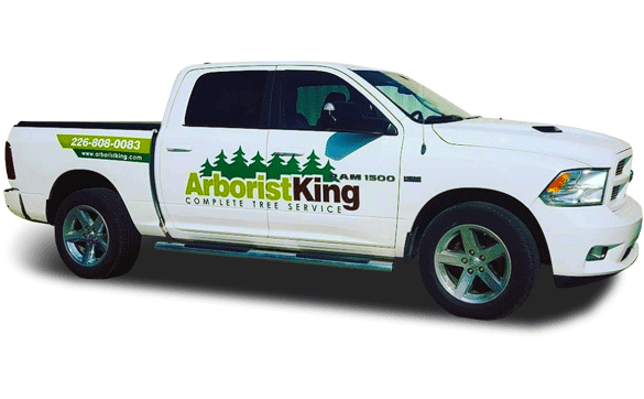 Vehicle-Graphics_ArboristKing_585x362